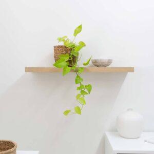 SMLIFE | Kệ gỗ treo tường SML60